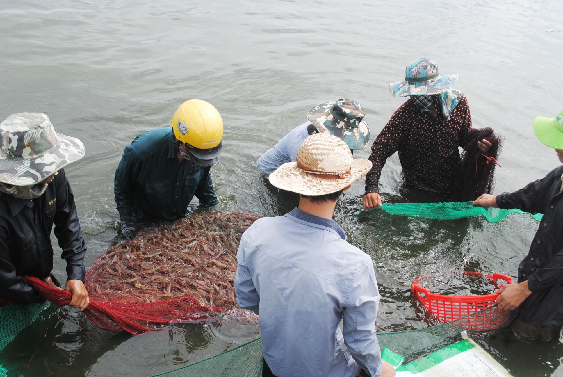 Hạ Trạch đột phá từ nuôi trồng thủy sản