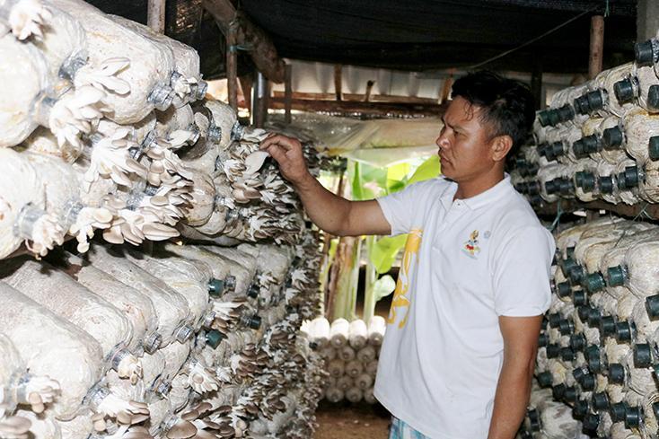 Thu tiền triệu mỗi ngày từ trồng nấm