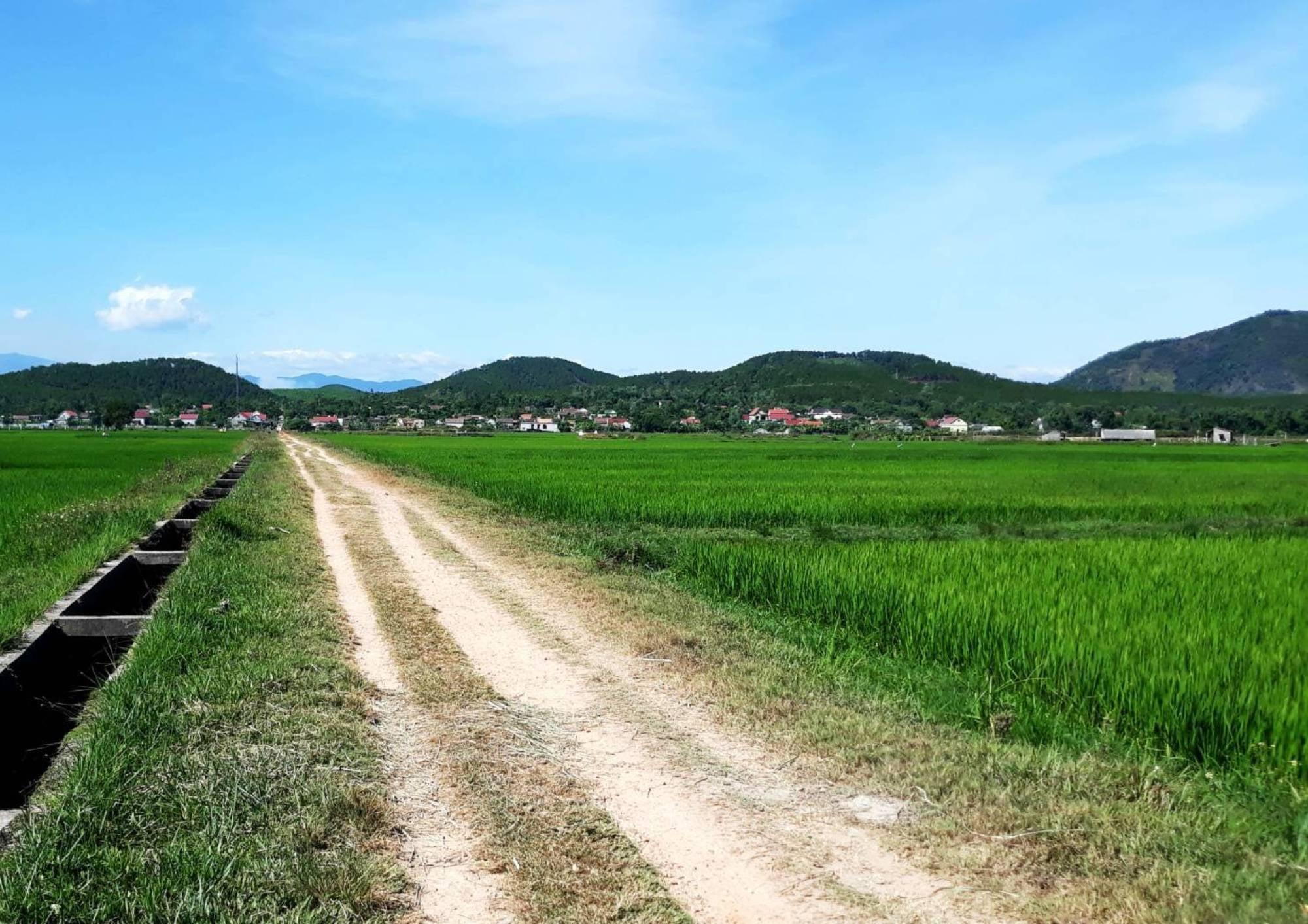 Những người con xóm Rẫy Côi làng Hạ xa quê